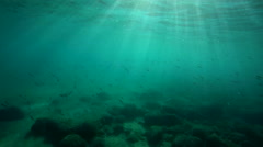 A large group of fish swim in the Aegean Sea in Greece Stock Footage