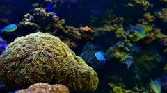 4K Tropical Fish and Coral Reef, Underwater Water Beauty, Blue Fish Stock Footage