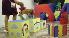 Cute dog at the birthday party Stock Footage