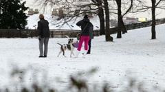Owners play with their dogs in social park Vysehrad, Stock Footage
