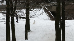 Owners play with their dogs in park Vysehrad, Prague Winter Stock Footage