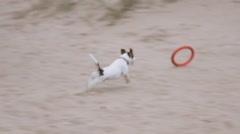 Dog plays with a toy on the beach Stock Footage
