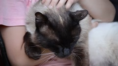 Young girl holds a Burmese cat in his arms and stroked easy Stock Footage