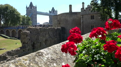 Great Britain England Tower of London with red flowers and Tower Bridge Stock Footage