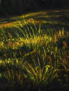 Detail of nocturnal meadow with grass halms, painting and computer graphic Stock Illustration