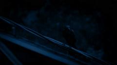 Bird On Wire In Heavy Rain At Night Stock Footage