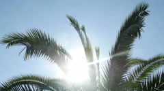 4k, palm leaves on a background of clear sky and sun 3 Stock Footage
