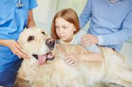 Ill dog lying on vet table while their owners seeing him off before medical trea Stock Photos
