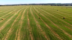 Bales of straw at late afternoon. summer landscape- aerial view Stock Footage