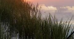Marsh Grass in Sunset Light Stock Footage