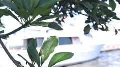Tropical tree plants are evolving from the wind. Yachts and motor boats on a Stock Footage