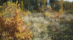Forest Glade in autumn colours. Stock Footage