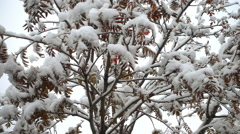 First snow in October Stock Footage