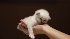 Tired baby cat on hand Stock Footage