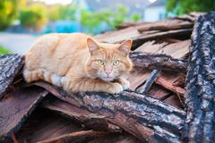 Beautiful red cat lays on wood summer Stock Photos