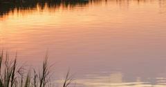 Marsh Grass in Golden Sunset Light Stock Footage