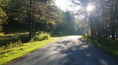 Morning. Empty forest road, route in the countryside without car Stock Footage
