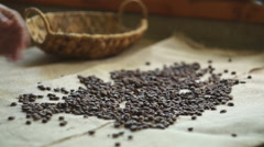 Woman collects roasted coffee beans Stock Footage
