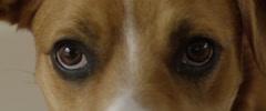Close-up of dog eyes Stock Footage