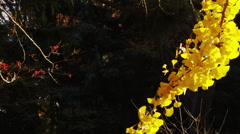 Beautiful Autumn Foliage in the Park Stock Footage