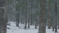 Snow fall in forest during winter Stock Footage