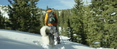 Skier with his husky dog walking in snow Stock Footage