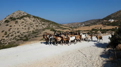 Goats and shepherd in mountains, Greece. Stock Footage