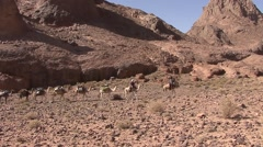 Bedouin caravan walking through stony desert in the Hoggar Mountains Stock Footage