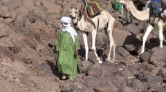 Bedouin leading the fully packed Dromedar down a stony slope Stock Footage