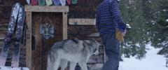 Man walking with husky dog Stock Footage