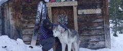 Man petting a husky dog Stock Footage