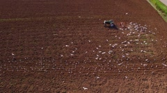 Amazing aerial view of seagulls feeding on worms behind tractor tilling soil. Stock Footage