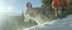 Husky dog and snowboarder resting on mountain slope Stock Footage