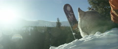Husky dog sitting on snow Stock Footage