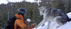 Snowboarder playing with husky dog Stock Footage
