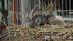 Rabbits in Cage Stock Footage