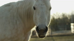 Horse eating hay in ranch Stock Footage