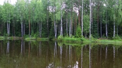 Forest lake in the summer in the north of Russia Stock Footage