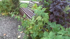 Bench in urban Park in autumn slow HD Stock Footage