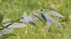 Bush wet from rain Stock Footage