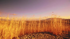 Tall waving grass on a hill in Utah Stock Footage