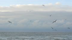 Seagulls Flying with Cloudy Skies Stock Footage