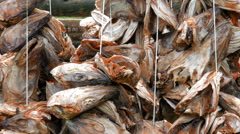 Stockfish hanging to dry Stock Footage