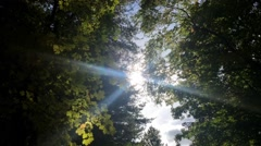 Amazing Forest Sun Burst Pan Stock Footage