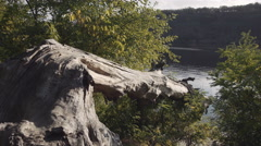 Landscape of nature with an old broken tree in water Stock Footage