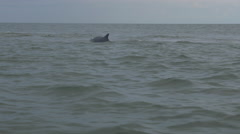 Dolphin Surfaces in Open Sea Stock Footage