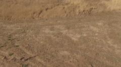 Wild deer in aerial shot northern california Stock Footage