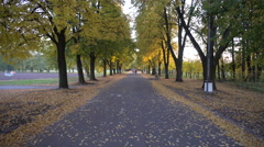 Alley in Autumn Park Stock Footage