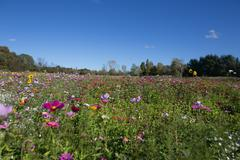 A field with a few flowers in Autumn Canada Stock Photos