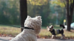 Dogs sniffing each other and wag their tails. The meeting of two dogs Stock Footage